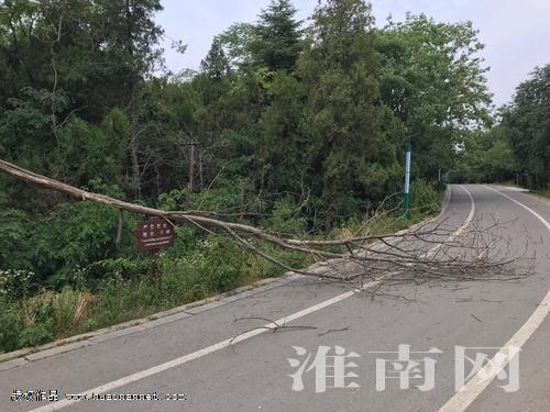 树木倒地挡路